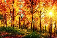 Фотообои флизелиновые 3D Природа 375х250 см Солнечный лес (MS-5-0067)