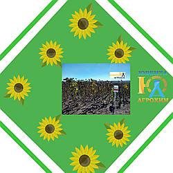Насіння соняшнику АС33101КЛ