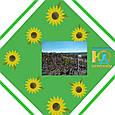 Насіння соняшнику АС 33110 SU, фото 2