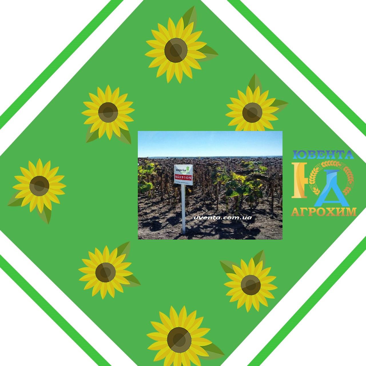 Насіння соняшнику АС33105 ОР7+