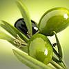 Оливки. Черные или зеленые?