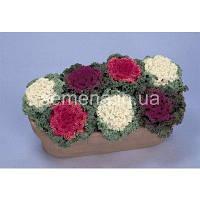 Насіння декоративної капусти Нагоя суміш, 20 шт