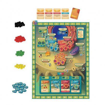 Настольная игра Микромир. Биология Клетки (Cytosis: A Cell Biology), фото 2