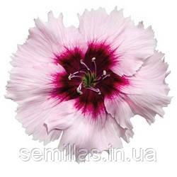 Семена гвоздики китайской Диана F1, 1000 сем., белая с пурпурным центром