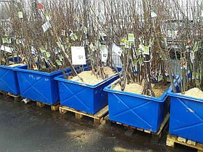 Пластиковые контейнеры на 1000 л., фото 2