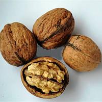 Грецкий орех Песчанский (привитой)