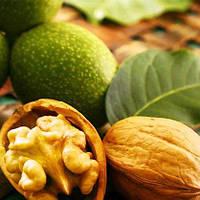 Грецкий орех Скиноский привитой
