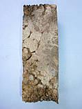 Брусок, кап акации, фото 3