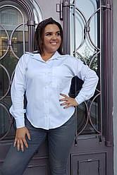 Женская блуза 0232