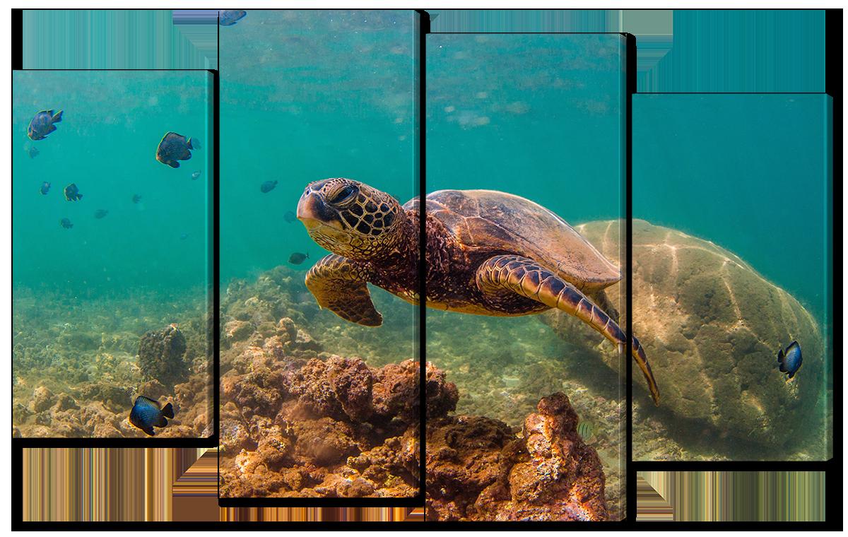 Модульная картина Interno Холст Рыбки и черепаха 166x120см (R1697XXL)