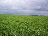 Особливості захисту врожаю