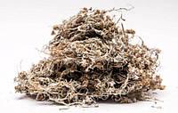 Сушеница топяная (болотная) 100 грамм.