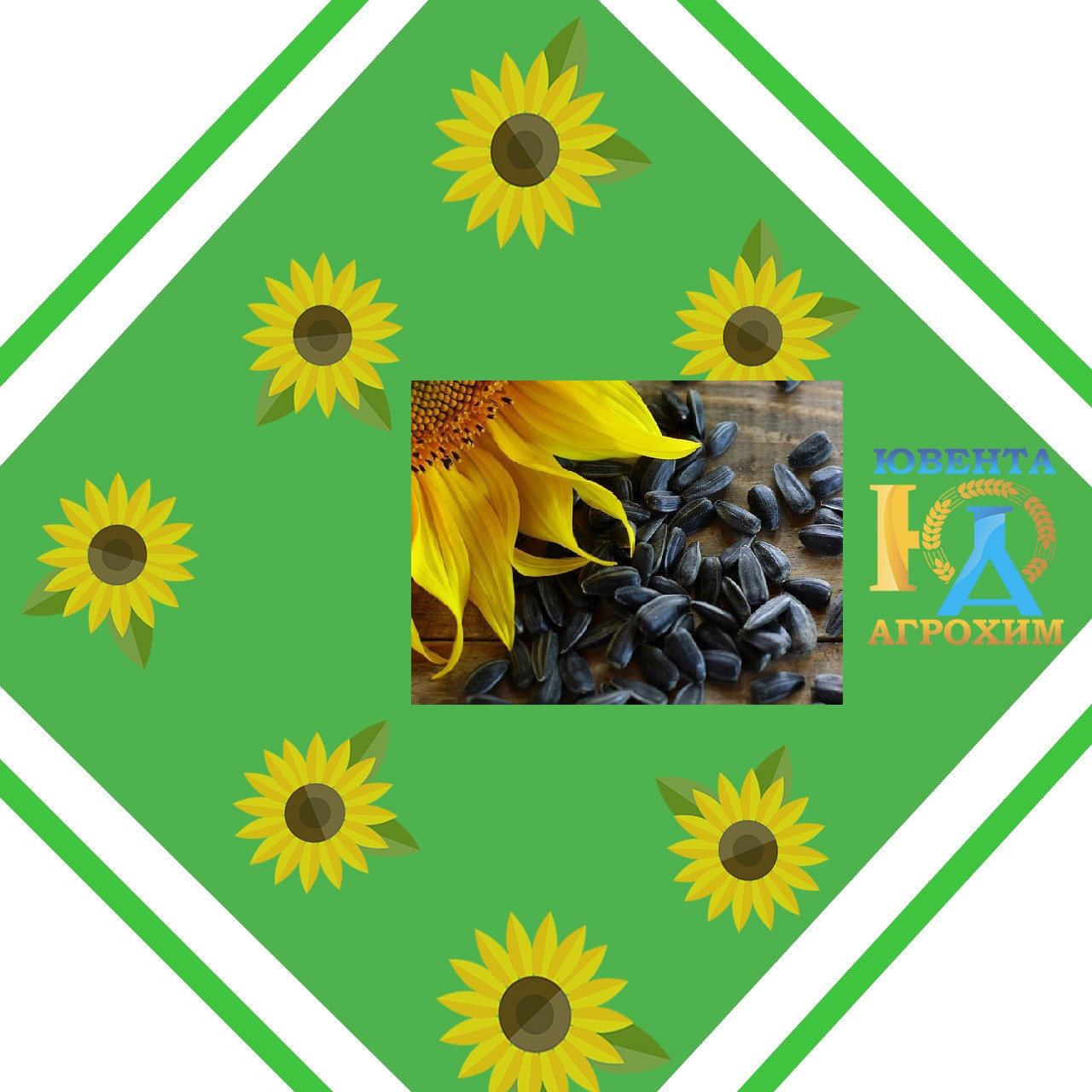 Насіння соняшнику АС34106 ОR8