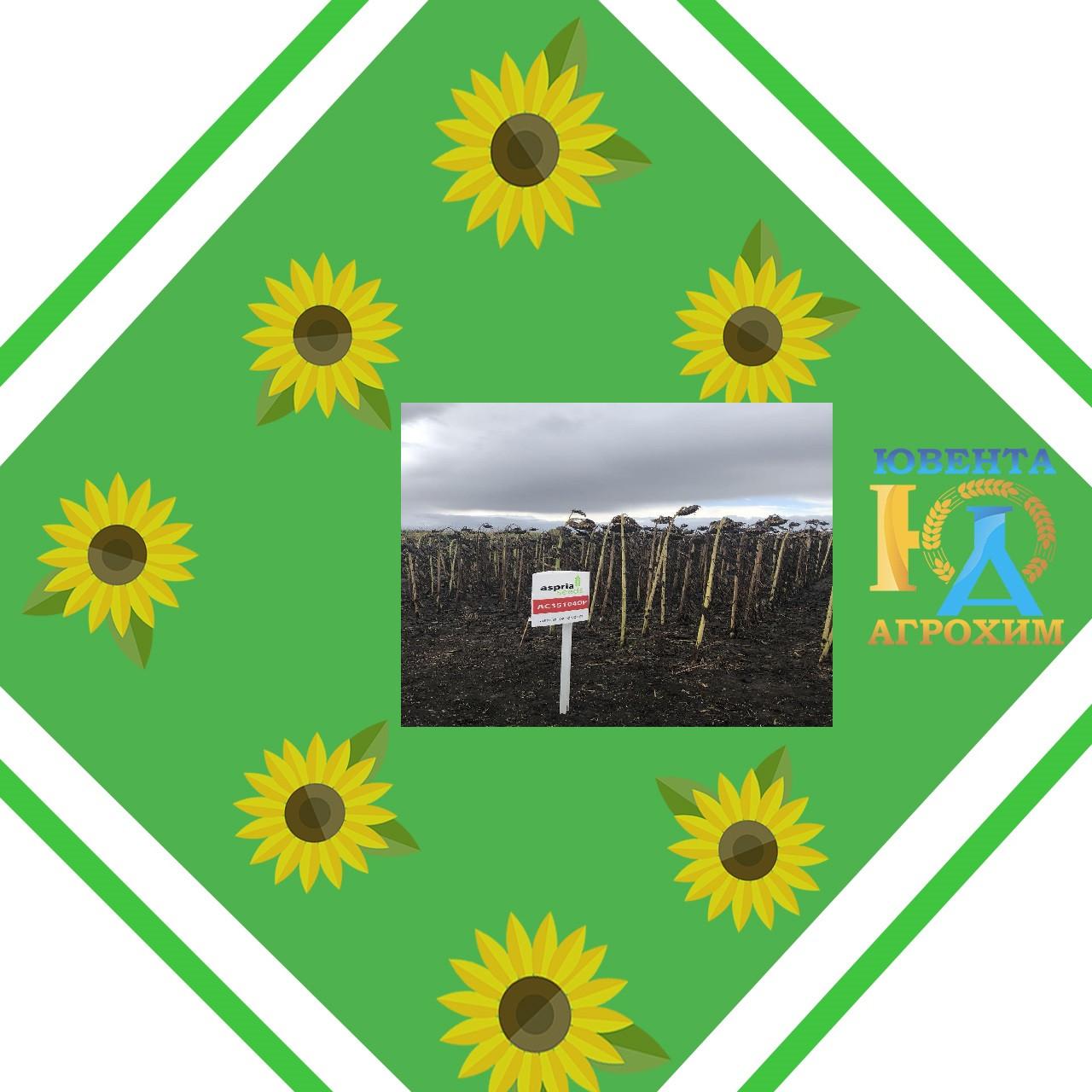 Насіння соняшнику АС35104 ОР