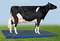 Дезинфекционный коврик для скота (ветковрик) 100*100*6 см