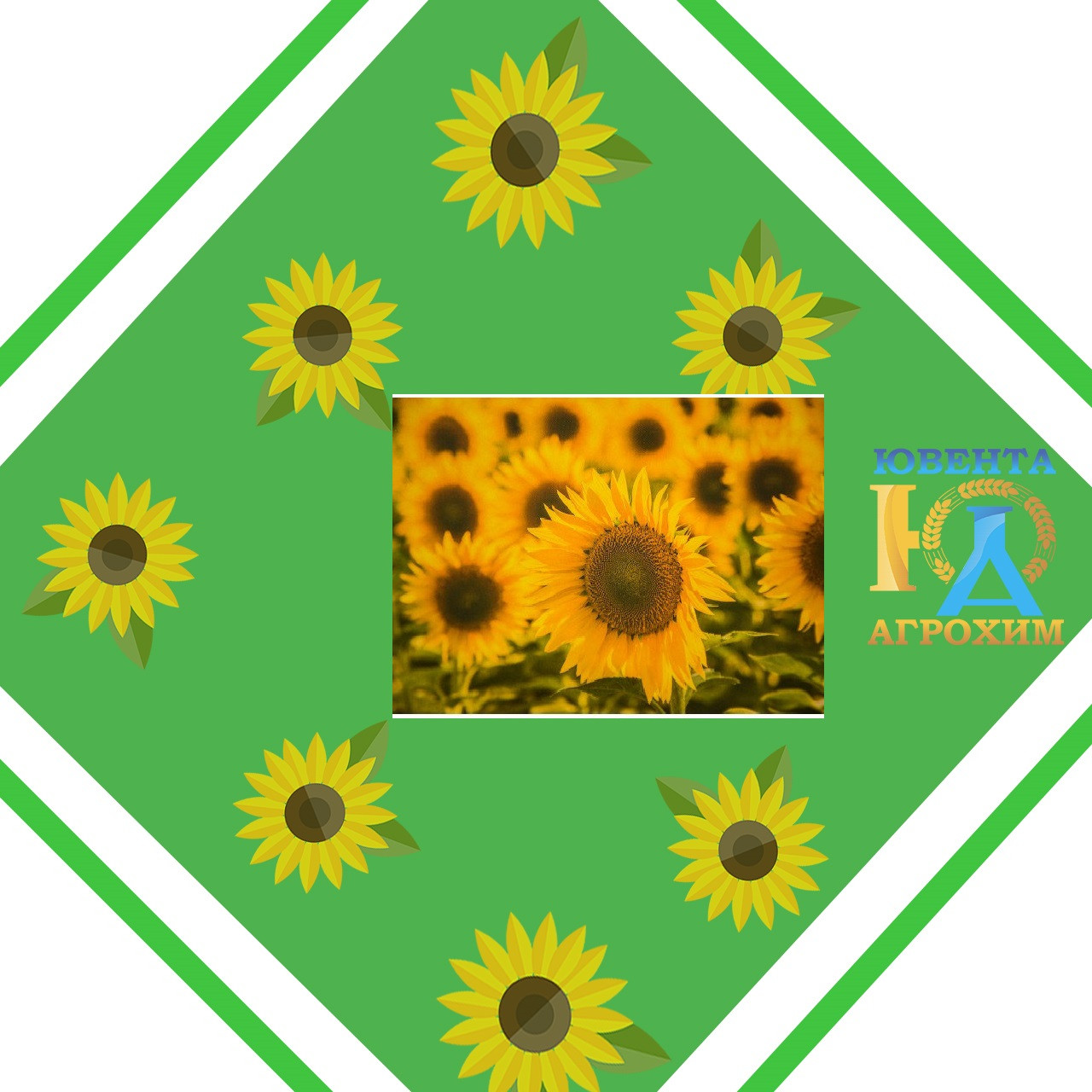 Насіння соняшнику Карлос 105 (стандарт)