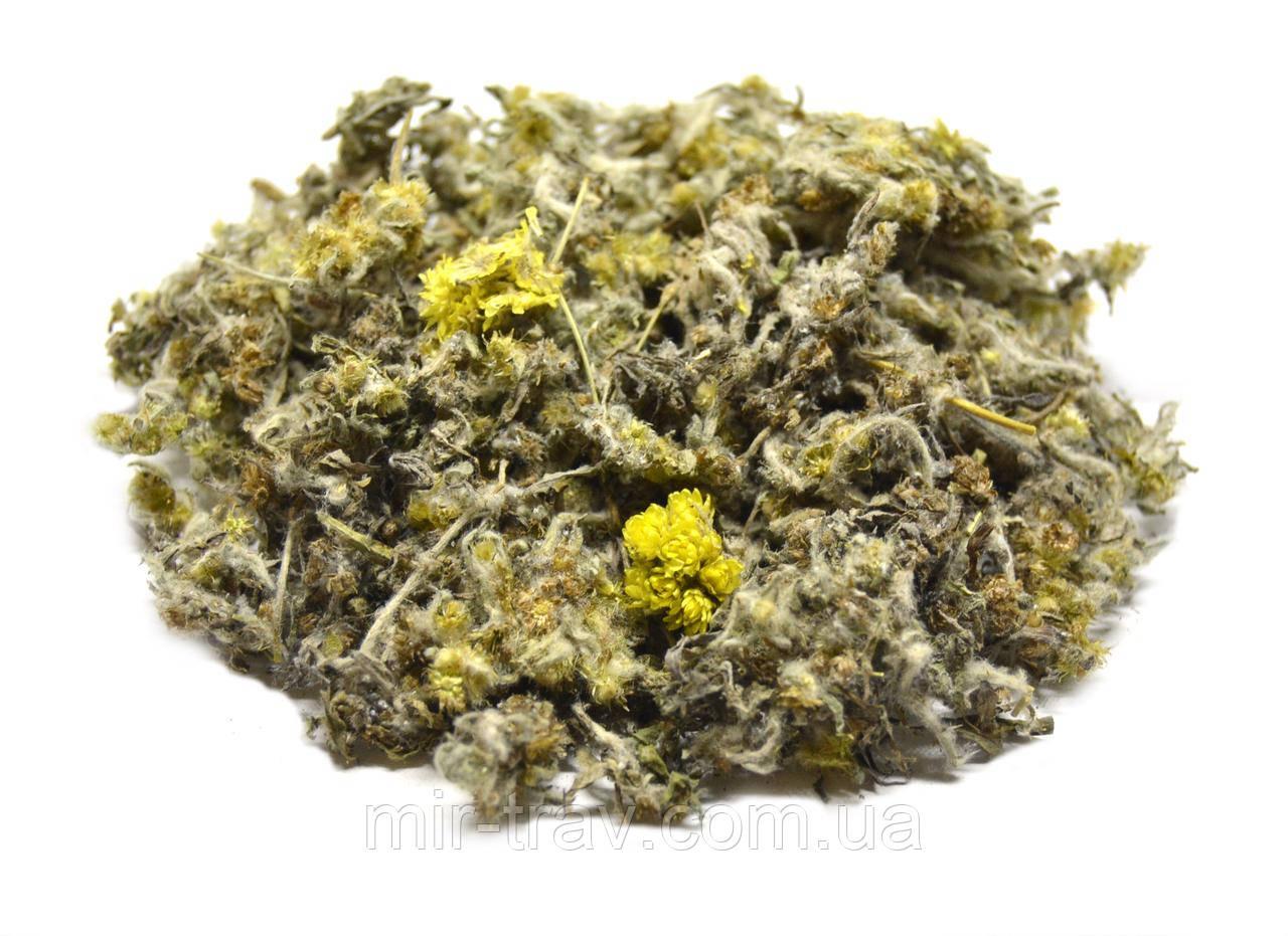 Сушеница топяная трава (сушеница болотная)