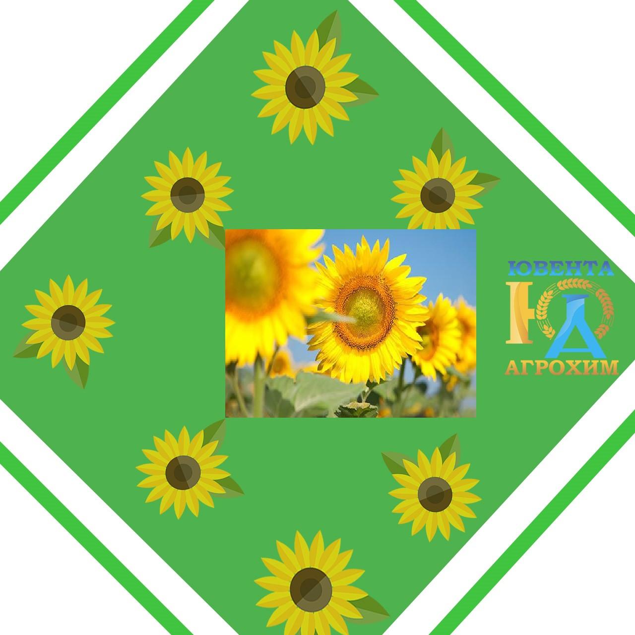 Семена подсолнечника Солнечное настроение (экстр.)