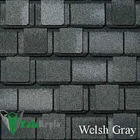 Welsh Gray (Велш Грей) «Camelot»