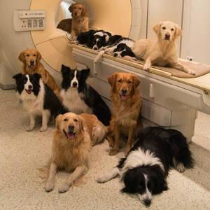 Ветеринарне обладнання