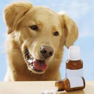 кортикостероїди для тварин
