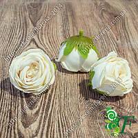 Головка роз Луиза молочный
