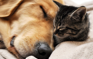 Ferplast SOFA' CUSHION Мягкое место-подушка для собак из хлопка