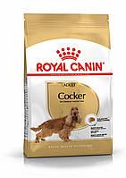 Royal Canin  Cocker Adult 3кг-корм для собак породы кокер-спаниель в возрасте старше 12 месяцев