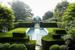 Живые изгороди и бордюры важный элемент в ландшафтном дизайне