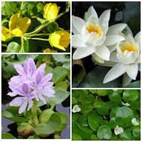 Растения для прудов, водоемов