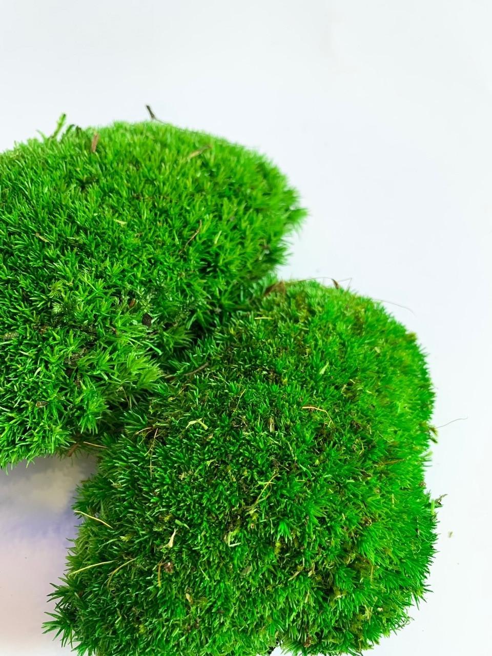 Стабилизированный мох кочки 500 гр. зеленый