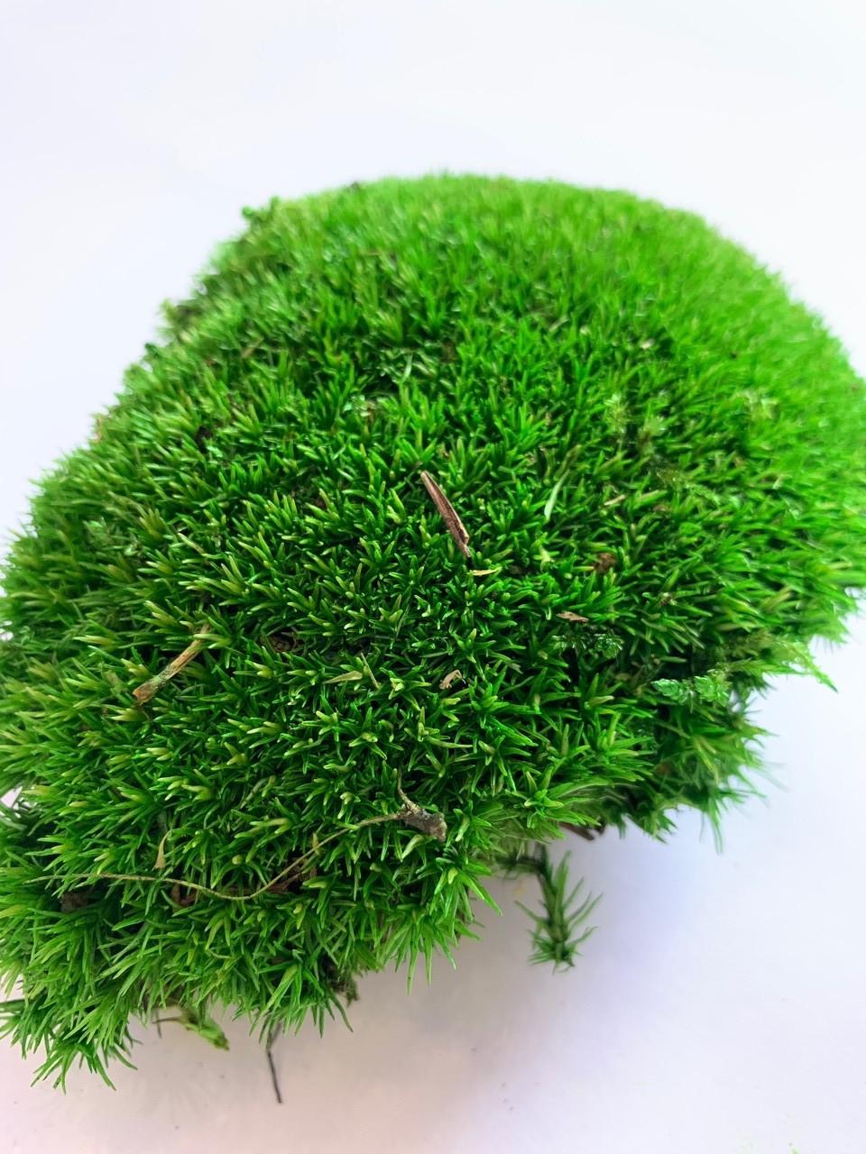 Мох стабилизированный  кочки 500 гр. зеленый