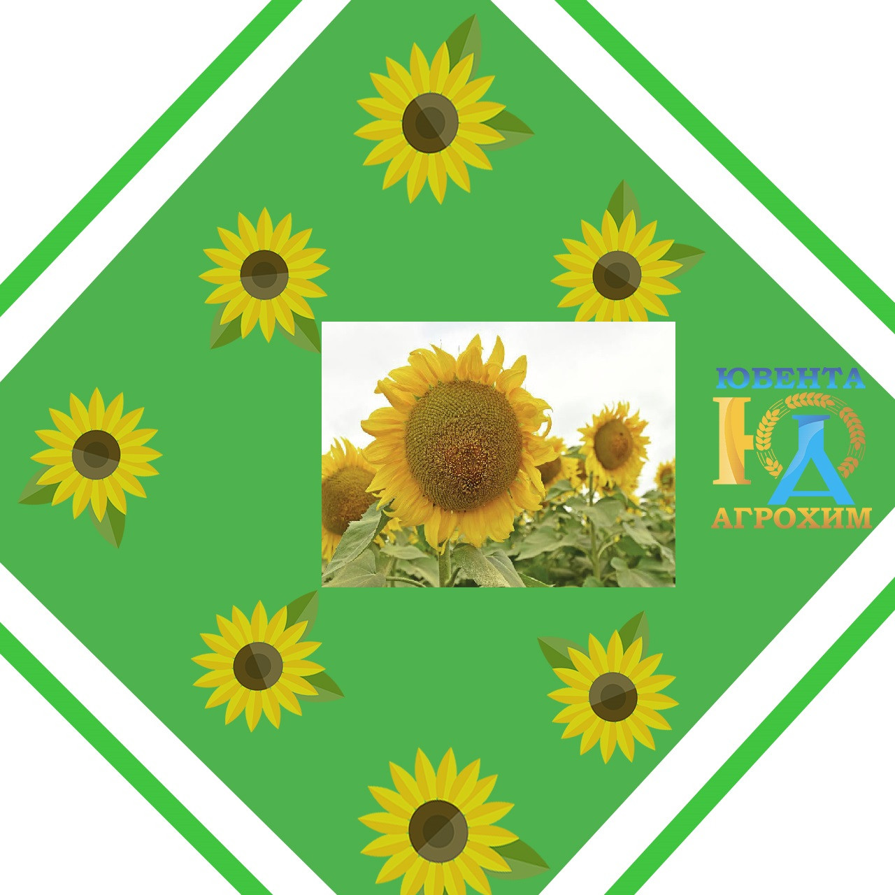 Семена подсолнечника НК Фортими  (евролайтнинг)