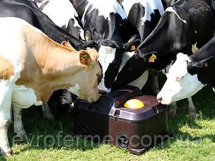 Поилки для коров