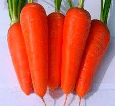 Семена моркови Шантане Ред