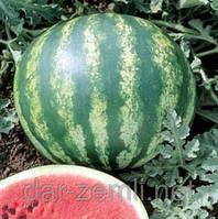 Семена арбуза Серо Волжский ( от производителя)