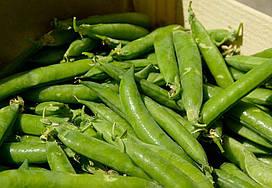 Семена сахарного (овощного) гороха Изольда (Польша)