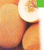 Семена дыни Инея оптом на вес.