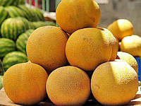 Семена дыни Колхозница ( оптом на вес от производителя)