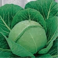 Весовые семена капусты Тюркис