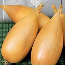 Семена лука Любчик (весовые оптом от производителя)