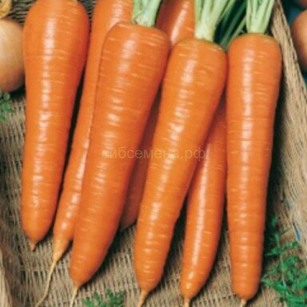 Семена Моркови Королева осени на вес оптом.