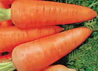Семена моркови Шантане Сквирская. Сочная,мягкая,хрустящая и очень сладкая.