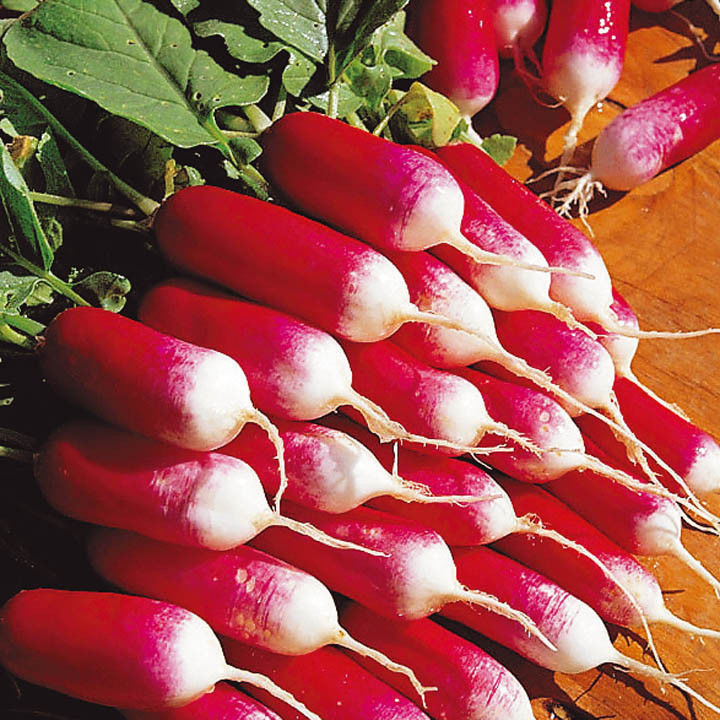 Весовые семена Редиса  Базис