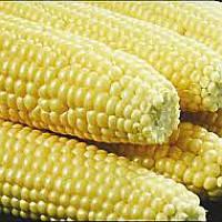 Семена сахарной кукурузы Сахарная