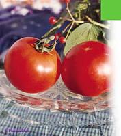 Семена томата (комнатный) Владимир Высоцкий.