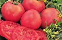 Семена томата Розовый Гигант