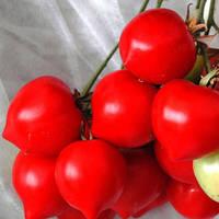 Семена томата Тарасенка F2