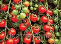 Семена томата Чери