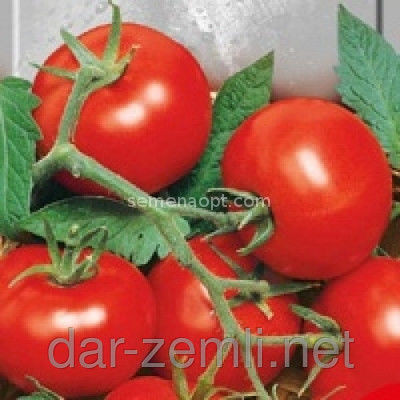 Семена томата Эфемер ( супер ранний)